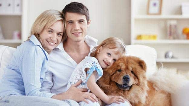 Wills & Trusts dog-young-family Direct Wills Romsey